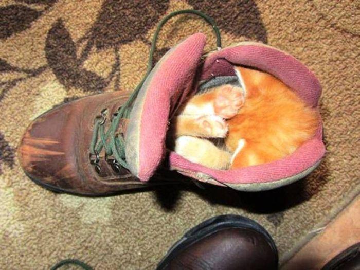 Funny cats - part 291, cat photo, best cute cat, funny cat image