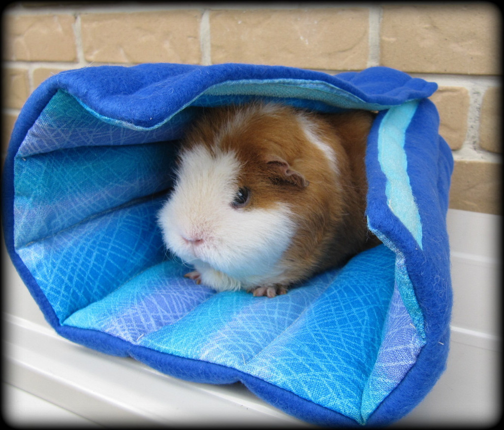 Can I Cuddle With You: All Things Guinea Pig: Cuddle Sacks