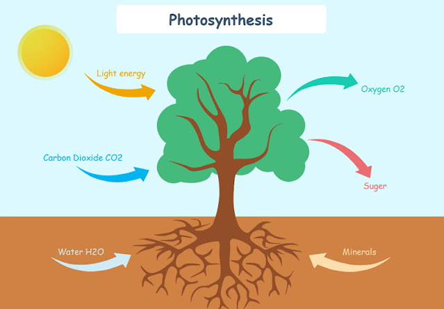 Yang Mempengaruhi Fotosintesis