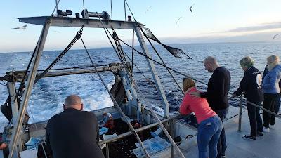 Análisis del real decreto de pesca-turismo 2019