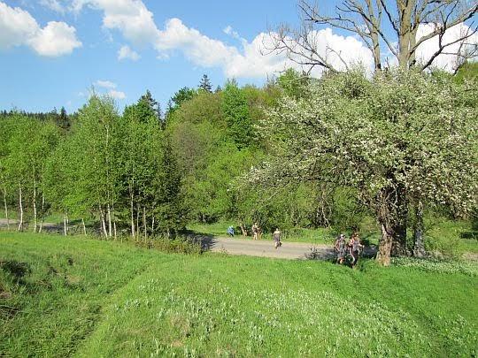 Szosa w Krzywej (teren dawnej wsi Jasionka).