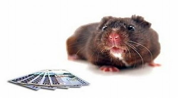 Begini 5 Cara Ampuh Membuat Perangkap Tikus yang Efektif