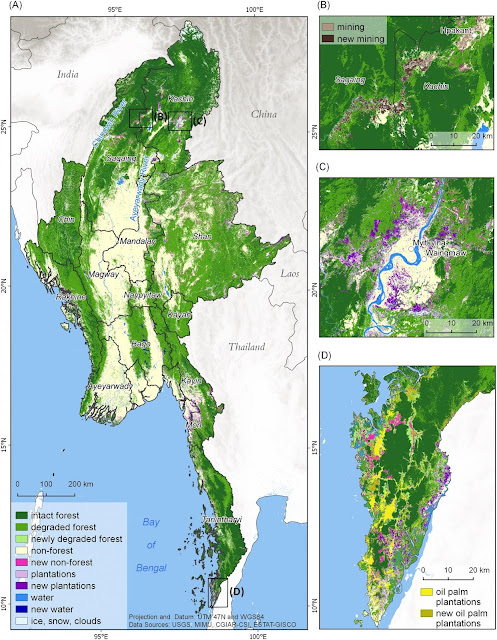 Myanmar's extensive forests are declining rapidly due to political and economic change