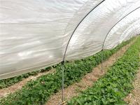 Kegunaan Plastik UV Untuk Greenhouse dan Pengeringan