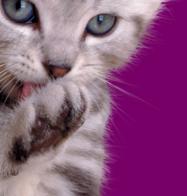 Bagaimana tutorial mengecekkan kesehatan anak kucingmu