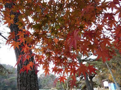くろんど池 秋の紅葉ウォーキング
