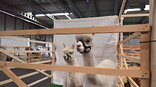 10. Internationale Alpaka Show in der Messe Erfurt