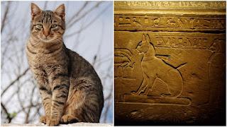 La historia del gato doméstico