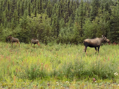 Our RV Spooked Mama Moose at First