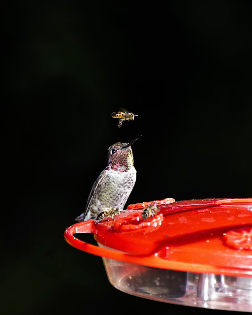"Hummingbird: ""Who is she? Why is she dancing on my head?!"""