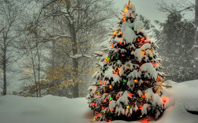Snow fall Christmas Tree Photo
