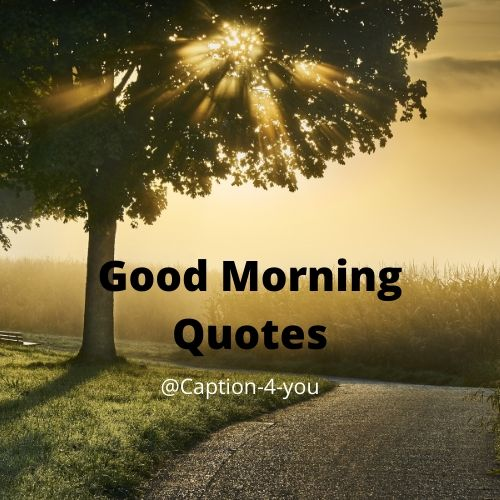 List Of Top 50 Beautiful Good Morning Quotes Quotes That Make Your Day Beautiful