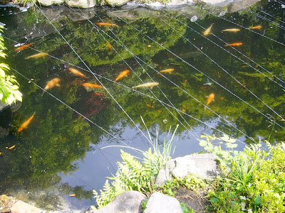 野崎観音 庭園の池 錦鯉