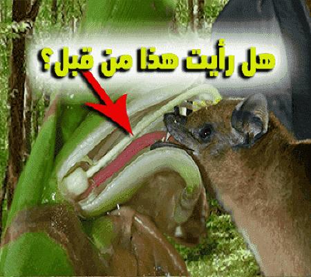 اكبر هجرة للثدييات علي وجه الارض تكون في جو السماء تعرف عليها!!