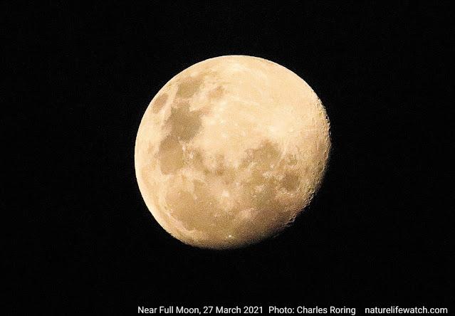 foto bulan sehari sebelum purnama