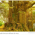 Essa árvore não parece morrer de velhice: imortalidade?