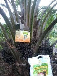 http://www.agenpupuksupernasa.com/2017/12/jual-pupuk-penyubur-pohon-sawit.html