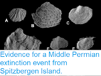 https://sciencythoughts.blogspot.com/2015/12/evidence-for-middle-permian-extinction.html