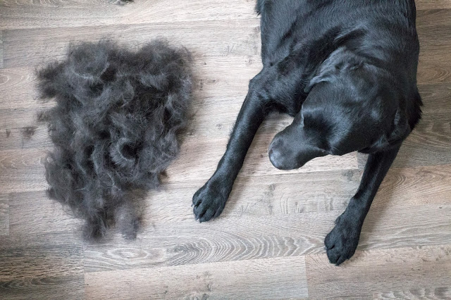 Why Is My Dog Losing Hair?