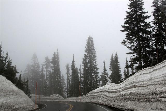 Paradise, Mt. Rainier National Park, WA