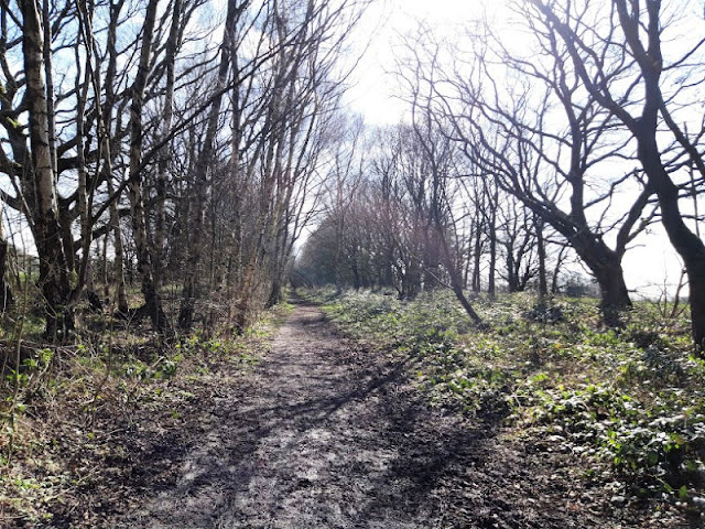 Image shows a sunny woodland path leading between bare trees