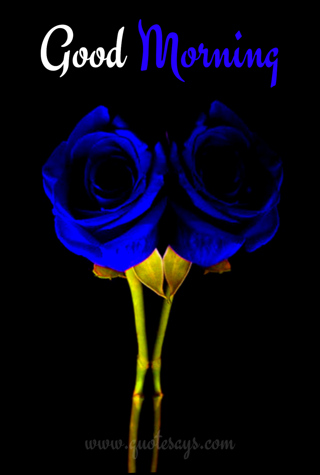 Good Morning Two Blue Roses