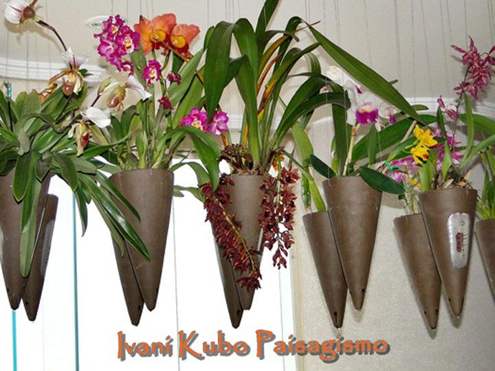 Orquídeas no apê em vasos cônicos