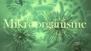 Cara Membuat  Mikroorganisme Untuk Pupuk Organik