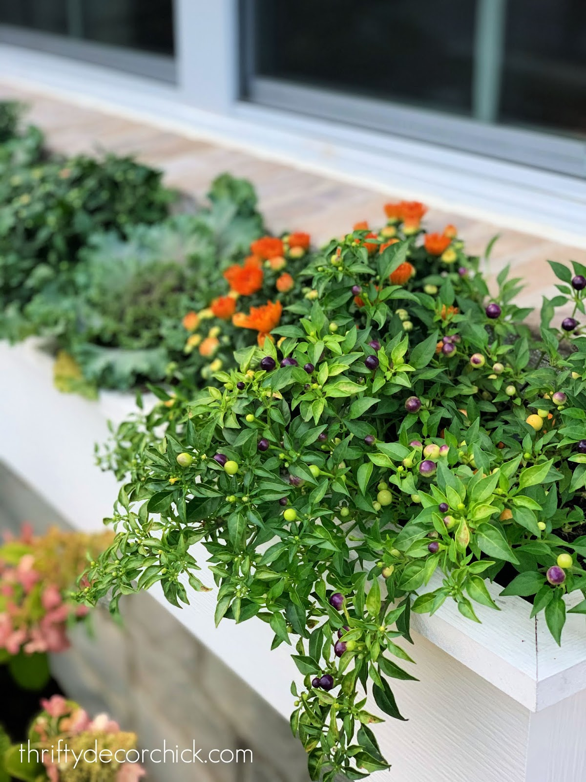Orange and purple peppers fall planters