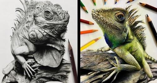 00-Reptile-Pencil-Drawings-A-Hirata-www-designstack-co