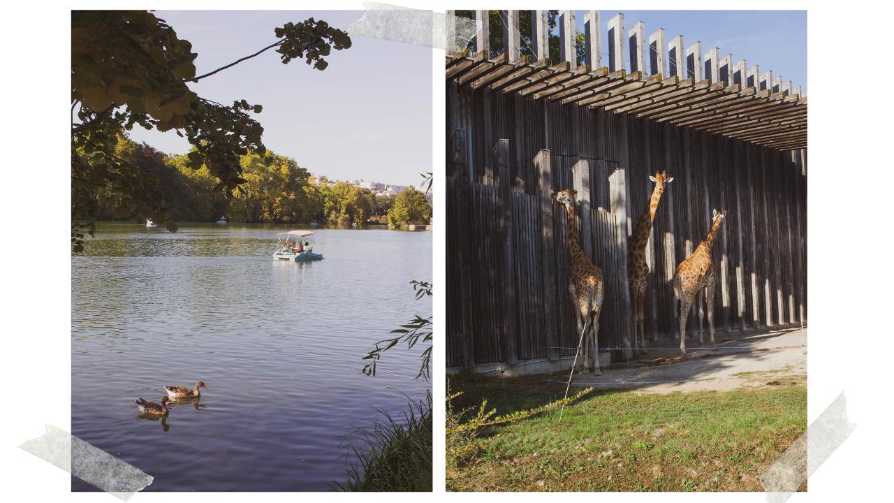 The lake and the giraffes at Parc de la Tête d'Or