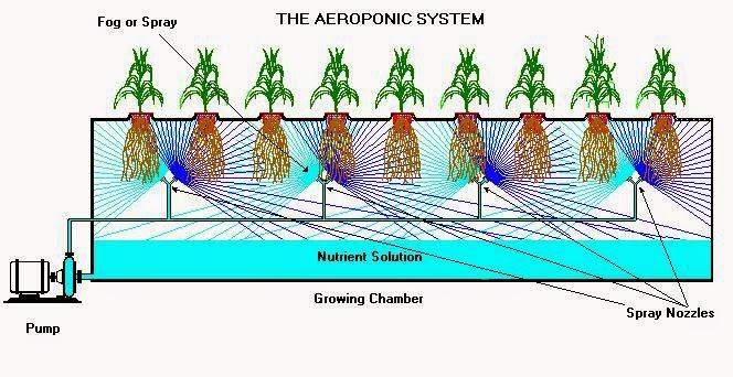 hidroponik-Aeroponik