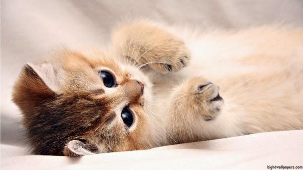 Fond d 39 cran chaton mignon fonds d 39 cran hd - Dessin de chat rigolo ...