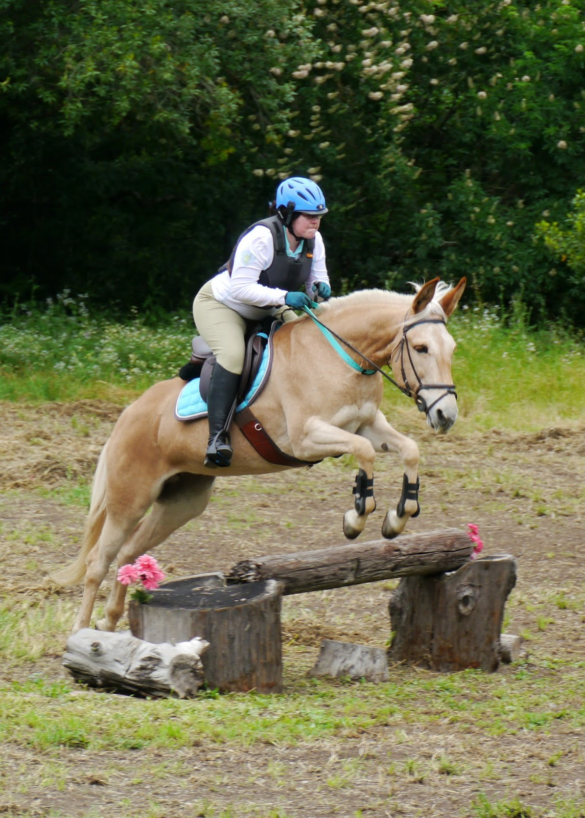 Horses jumping cross country - photo#45