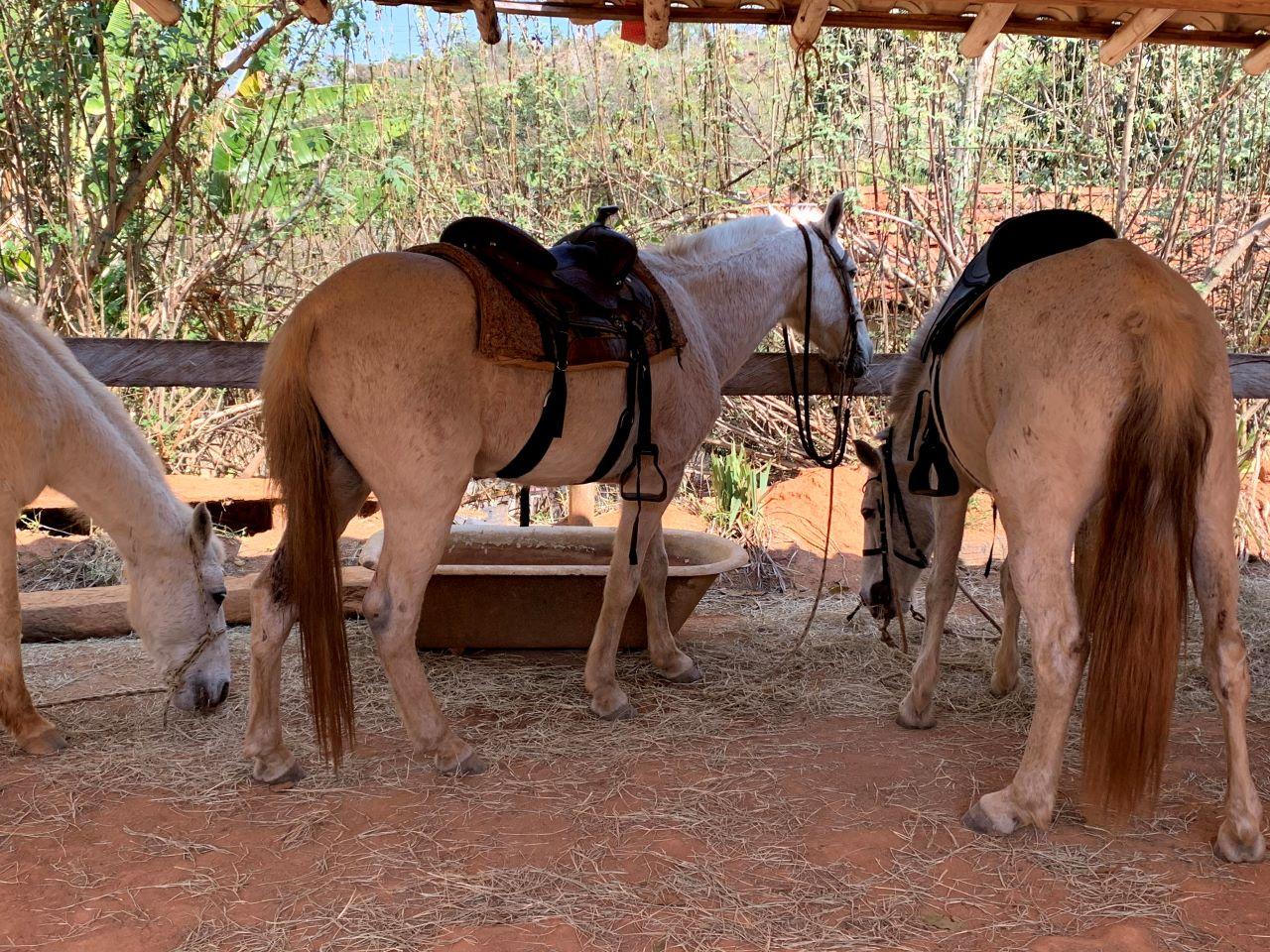 3 cavalos brancos