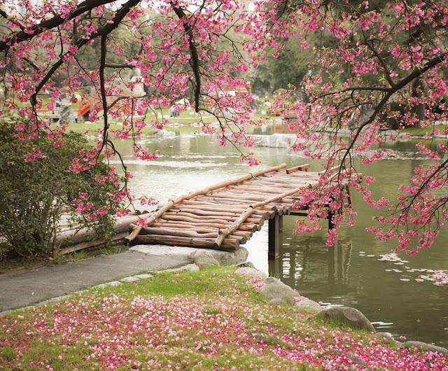 lago com uma ponte de madeira