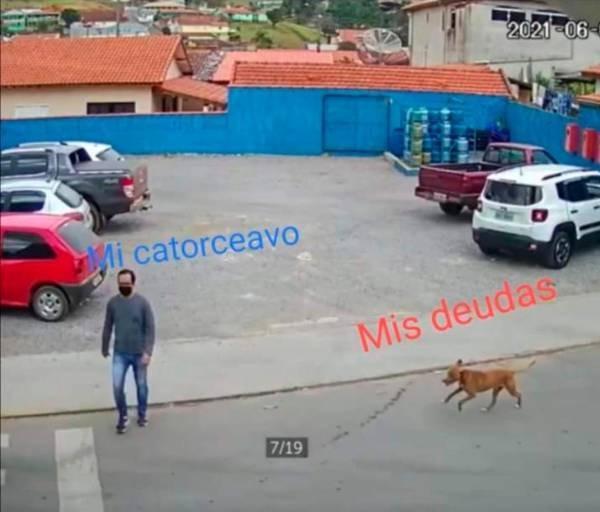 Perrito atropella a un hombre que estaba cruzando la calle; ¿es esta la venganza de los lomitos?
