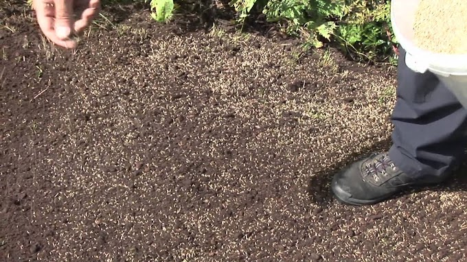 The How's In Seeding A New Lawn