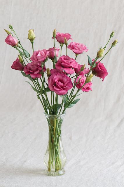 hoa cát tường đẹp nhất 2