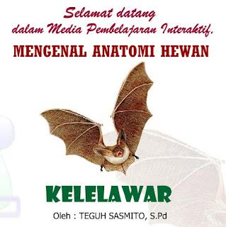Mengenal Anatomi Hewan Kelelawar (Ilmu Pengetahuan Alam)