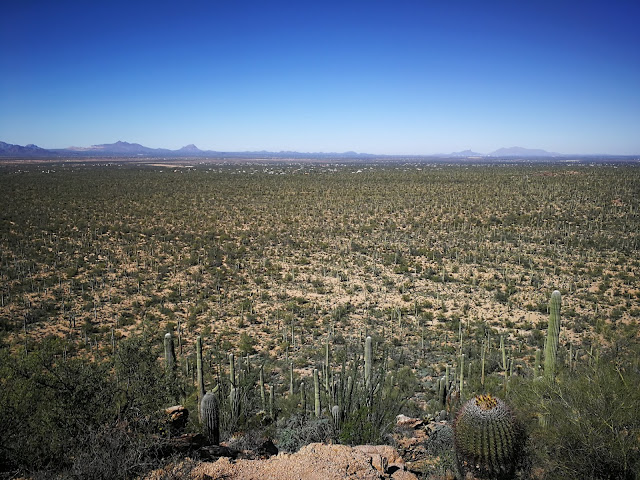 valley view saguaro national park