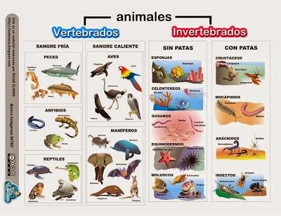 Resultado de imagen de clasificacion de animales vertebrados e invertebrados para niños