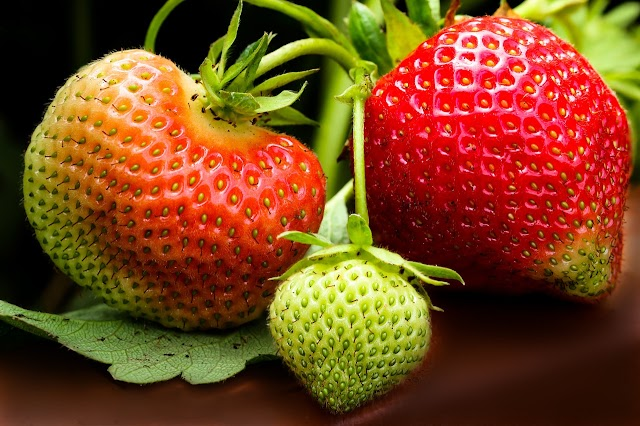 How to sow and grow a strawberry from seeds