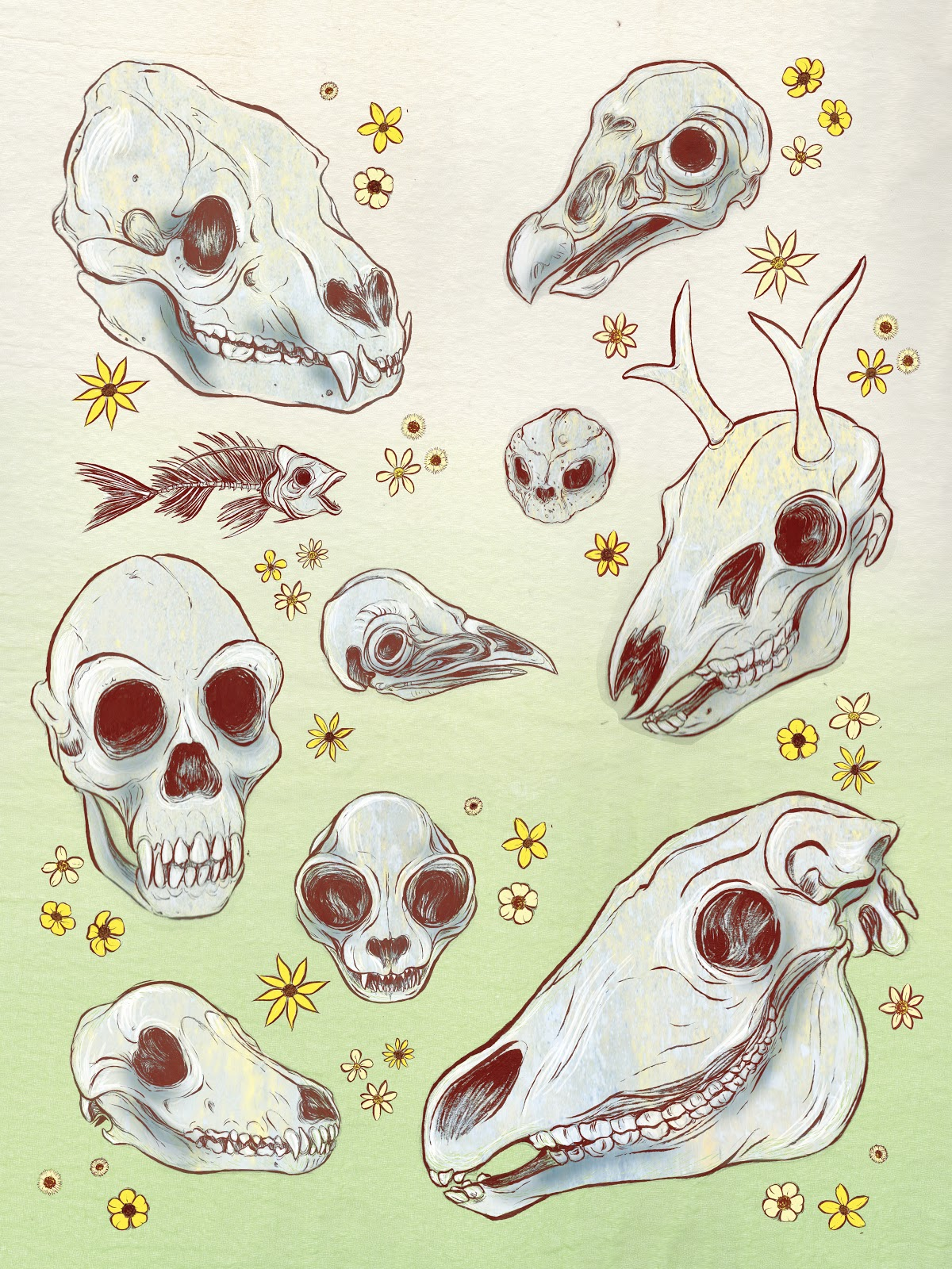 Animal skulls and flowers. RobinAnnWren.2013