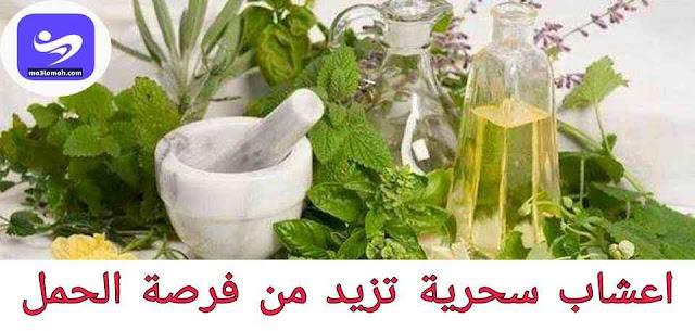 افضل اعشاب تساعد على الحمل وتنشيط المبايض