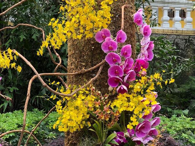 Orquideas no Jardim Lou Lim Ioc - Macau