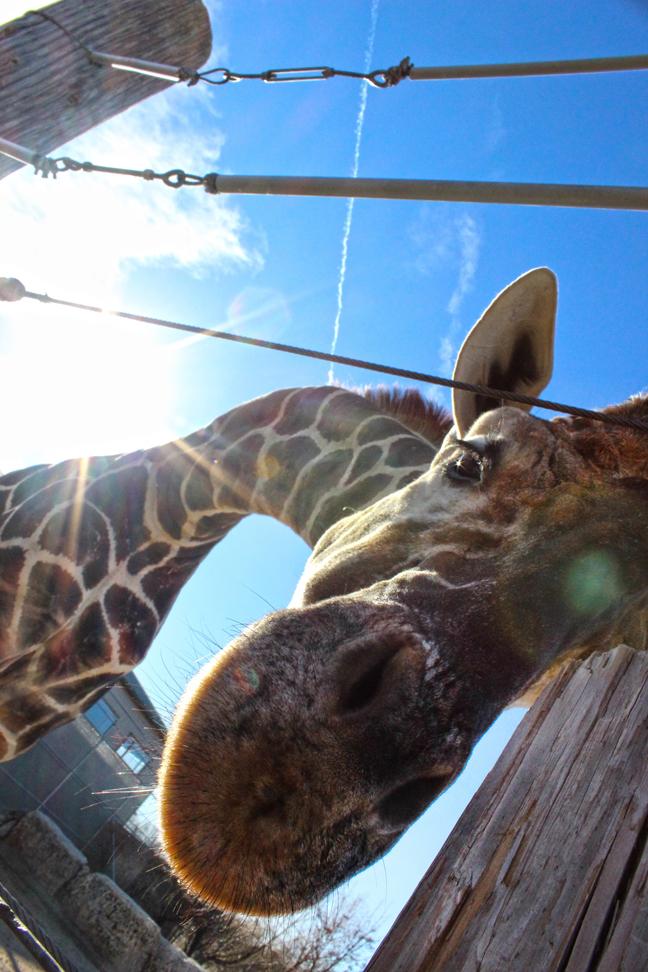 Kansas Transportation: Motoring Monday: Tanganyika Wildlife Park