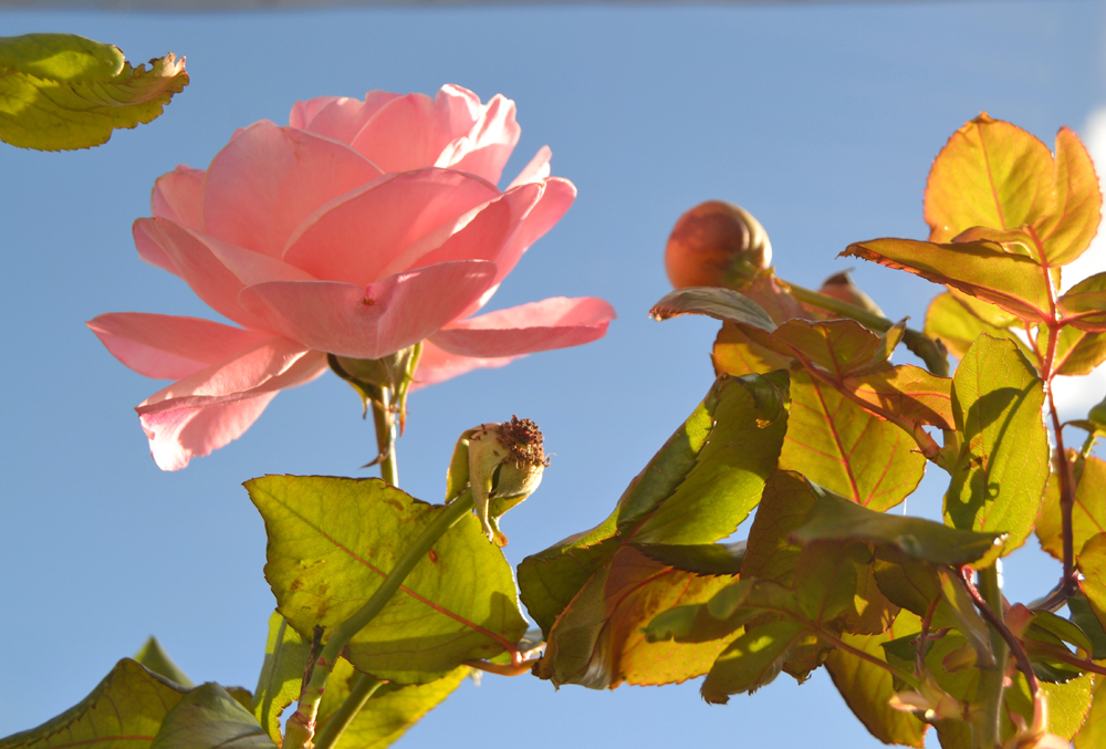 Qué necesitan tus plantas en otoño, si todavía no lo sabes, no te preocupes yo te lo cuento con todo detalle.