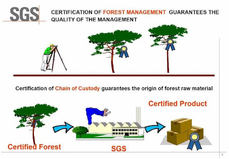 Jutaan Hektar LahaN Hutan di Indonesia Telah Tersertifikasi IFCC