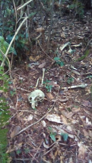 IBIRAPITANGA: Foi encontrada uma ossada humana na mata